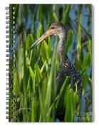 Limpkin Grass Spiral Notebook