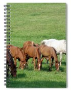 Line Feeding Spiral Notebook