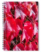 Linne Color Spiral Notebook
