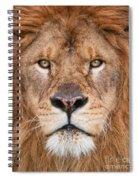 Lion Close Up Spiral Notebook