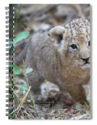 Lion Cub Spiral Notebook