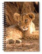 Lion Cub Panthera Leo Spiral Notebook