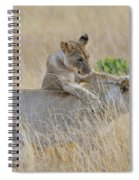 Lion Cub Playing With Female Lion Spiral Notebook