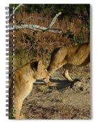 Lion Cubs Of Zimbabwe  Spiral Notebook