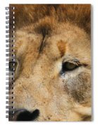 Lion Eyes Spiral Notebook