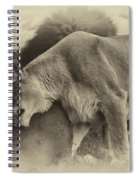 Lion Hugs In Heirloom Finish Spiral Notebook