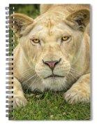 Lion In The Grass Spiral Notebook