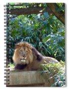 Lion King At Washington Zoo Spiral Notebook
