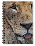Lion Portrait Panting Spiral Notebook