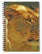Lioness 2012 Spiral Notebook