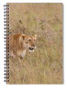 Lioness, Kenya Spiral Notebook