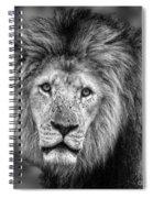 Lion's Eyes Spiral Notebook