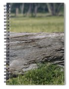 Lions Spiral Notebook