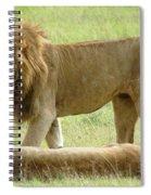 Lions On The Masai Mara Spiral Notebook