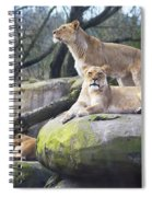 Lions Posing Spiral Notebook