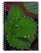 Liquid Pearls On Strawberry Leaves Spiral Notebook