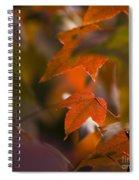 Liquidambar Autumn Spiral Notebook