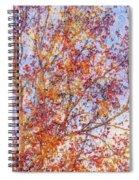Liquidambar Square Abstract Spiral Notebook