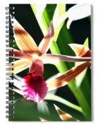 Lit Up Orchid Spiral Notebook