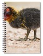 Little Baldy Spiral Notebook