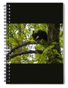 Little Bear Cub In Tree Cades Cove Spiral Notebook