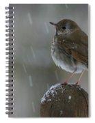 Little Bird Loving The Snow Spiral Notebook