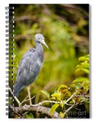 Little Blue Heron Spiral Notebook