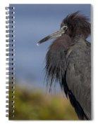 Little Blue Heron Spiral Notebook