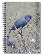 Little Blue Lake Martin Louisiana Spiral Notebook