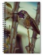 Little Costa's Hummingbird Spiral Notebook
