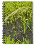 Little Creek Spiral Notebook