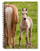 Little Foal Spiral Notebook