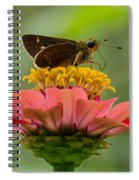 Little Glassywing Skipper Butterfly Spiral Notebook