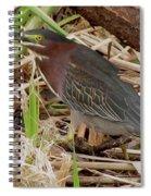 Little Green Heron Spiral Notebook