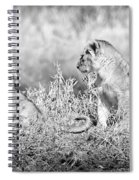 Little Lion Cub Brothers Spiral Notebook