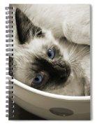 Little Miss Blue Eyes B W Spiral Notebook