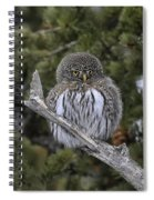 Little One - Northern Pygmy Owl Spiral Notebook