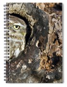 Little Owl 4 Spiral Notebook