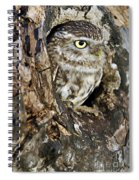 Little Owl In Hollow Tree Spiral Notebook