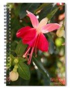 Little Red Skirt Spiral Notebook