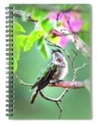 Little Ruby  - 5x7 Card Spiral Notebook