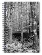 Little Trail Spiral Notebook
