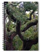 Live Oak Tree Spiral Notebook