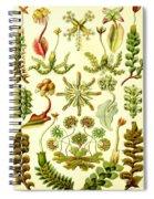 Liverworts Moss Brunnenlebermoos Haeckel Hepaticae Spiral Notebook