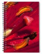 Living Inside A Lily Spiral Notebook