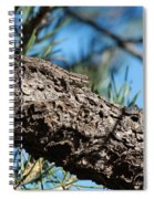 Lizard Bathing In The Sunshine Spiral Notebook