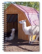 Llama Just Chilling Spiral Notebook
