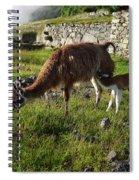 Llama Ya Mama Spiral Notebook