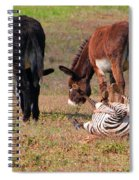 Lmao  Mules And Zebra - Featured In Wildlife Group Spiral Notebook