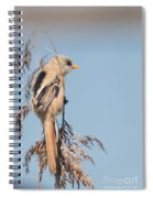 ln06 Bearded Reedling Juvenile Spiral Notebook